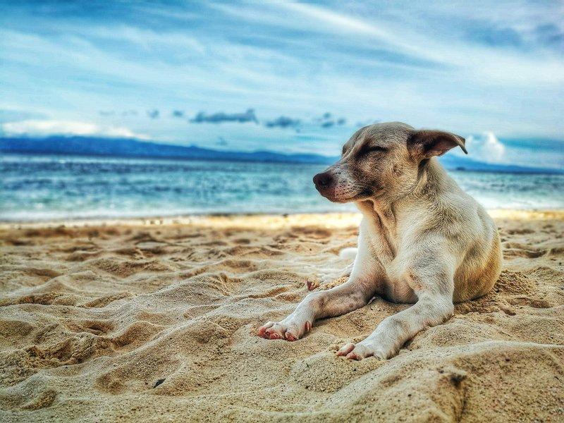 Ogrodzony domek na wyjazd z psem